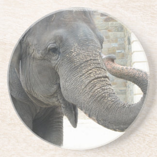 Trumpeting Elephant Coasters