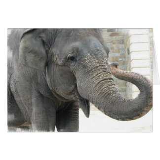 Trumpeting Elephant Greeting Card