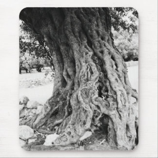 Trunk of ancient Olive tree in Greece photograph Mouse Pad