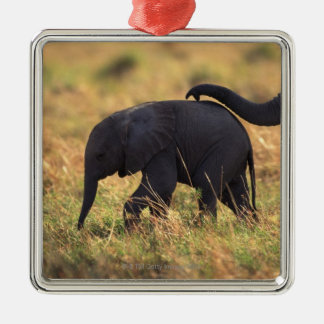 Trunk of elephant touching offspring , Kenya , Christmas Ornament