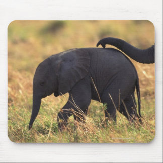Trunk of elephant touching offspring , Kenya , Mouse Pad