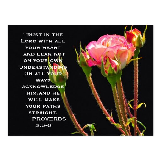 Trust in the lord Rose colorful postcard