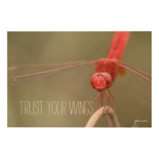 Trust Your Wings Quote Red Dragonfly Wood Canvases