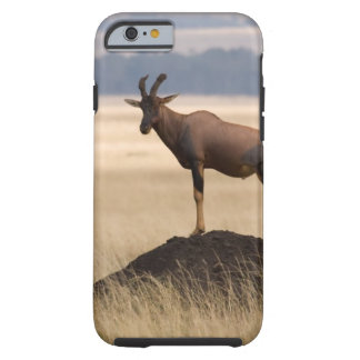 Tsessebe Antelope On Lookout For Predators Tough iPhone 6 Case