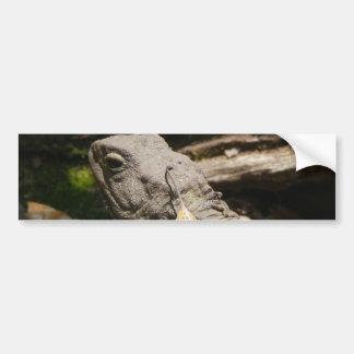 Tuatara - A Living Fossil Bumper Sticker