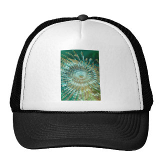Tube Worm Cap