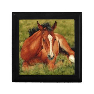 Tuckered Out - Resting Foal Gift Box
