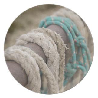Tucson, Arizona: Ropes and hanrnesses used  on Plate