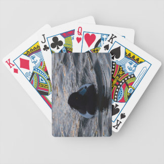 Tufted Duck Bicycle Playing Cards