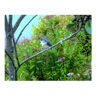 Tufted Titmouse Fledgling Baby Bird Postcard
