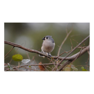 Tufted Titmouse Pack Of Standard Business Cards