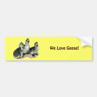 Tufted Toulouse Goslings Bumper Sticker