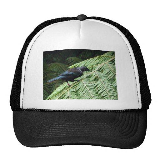 Tui Trucker Hats
