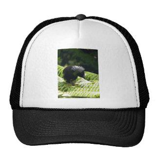 Tui Mesh Hat