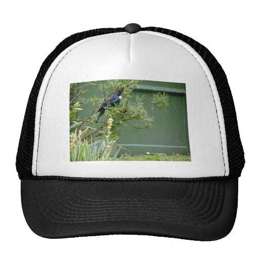 Tui Hats