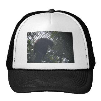 Tui Hat