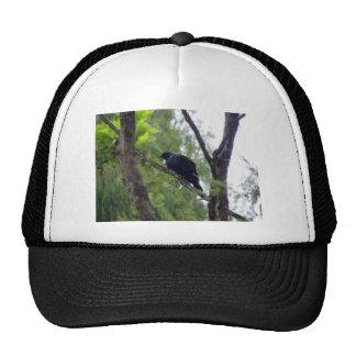 Tui in Rimu Tree Cap