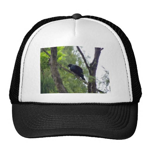 Tui in Rimu Tree Trucker Hat