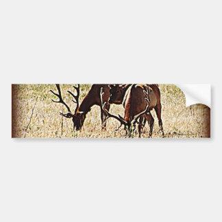 Tule Elk Bumper Sticker