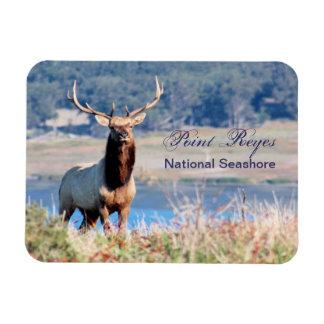 Tule Elk Reserve Point Reyes Rectangular Photo Magnet