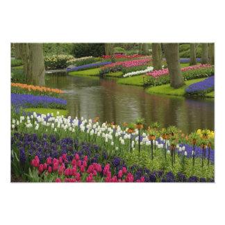 Tulip and hyacinth garden, Keukenhof Gardens, 2 Photo Print