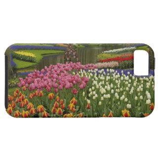 Tulip and hyacinth garden, Keukenhof Gardens, iPhone 5 Cases