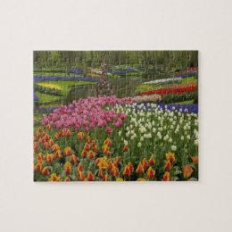 Tulip and hyacinth garden, Keukenhof Gardens, Jigsaw Puzzle