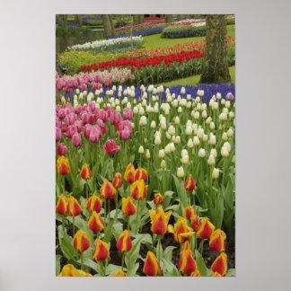 Tulip and hyacinth garden, Keukenhof Gardens, Poster