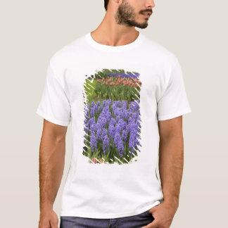 Tulip and Hyacinth garden, Keukenhof Gardens, T-Shirt