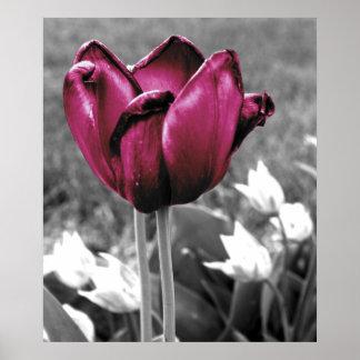 Tulip Art Posters