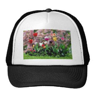 tulip bed trucker hats