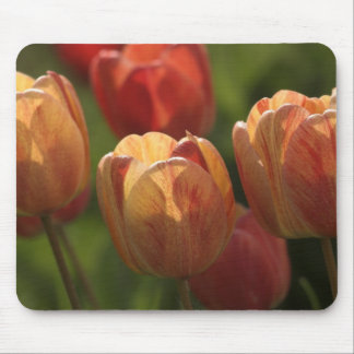 Tulip Blossoms Mouse Pad