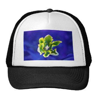 Tulip Blue Background.jpg Cap