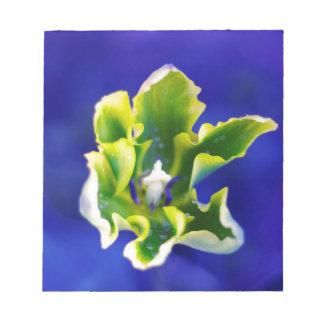 Tulip Blue Background.jpg Notepad