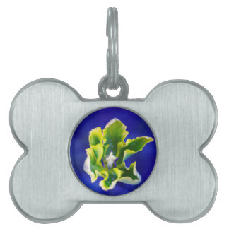 Tulip Blue Background.jpg Pet Tag