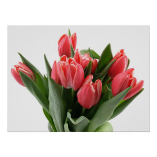 Tulip Bouquet Posters