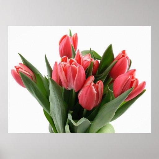 Tulip Bouquet Posters