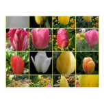 Tulip Collage Spring Postcard