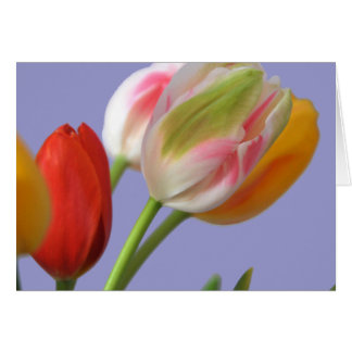 Tulip Colors Card