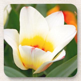 Tulip Coaster