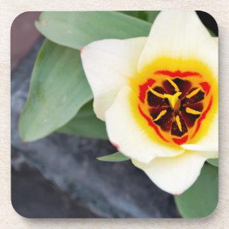 Tulip Drink Coaster