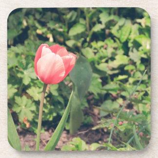 Tulip Beverage Coaster