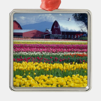 Tulip display field christmas ornament