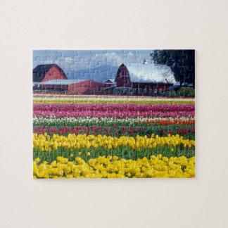 Tulip display field jigsaw puzzle