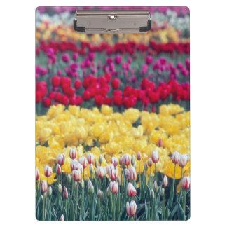 Tulip display garden in the Skagit valley, Clipboards