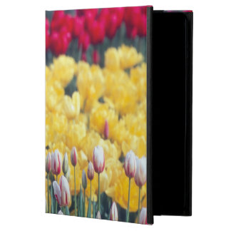 Tulip display garden in the Skagit valley, Cover For iPad Air