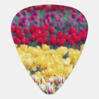 Tulip display garden in the Skagit valley, Guitar Pick