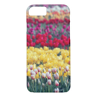 Tulip display garden in the Skagit valley, iPhone 8/7 Case