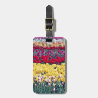 Tulip display garden in the Skagit valley, Luggage Tag