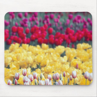 Tulip display garden in the Skagit valley, Mouse Pad